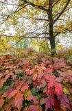 outono em Kiev Imagens de Stock Royalty Free