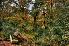 outono em madeiras de Styal Fotografia de Stock Royalty Free