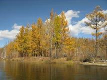 Outono em Mongolia Imagens de Stock