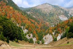Outono em montanhas Carpathian   Fotografia de Stock Royalty Free