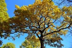 outono em outubro imagens de stock royalty free