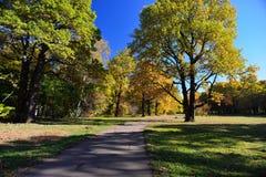 outono em outubro imagens de stock
