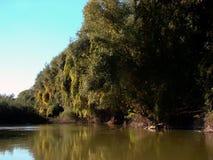 outono em outubro nos braços & no x28 do Danube River; channels& x29; 1 fotos de stock royalty free