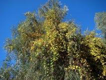 outono em outubro nos braços & no x28 do Danube River; channels& x29; 3 imagem de stock