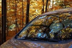 outono em outubro em que as florestas agitam as folhas 3 fotografia de stock royalty free