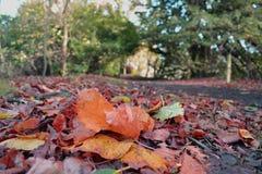 Outono em Scotland fotos de stock royalty free