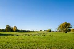 Outono em sweden Fotografia de Stock Royalty Free