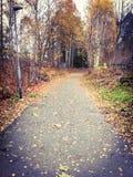 Outono em sweden Foto de Stock Royalty Free