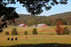 outono em um rancho de gado no piloto Knob, Missouri Imagem de Stock