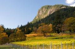Outono em um vinhedo Foto de Stock Royalty Free