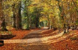 Outono em uma pista rural inglesa Foto de Stock Royalty Free