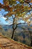 outono em Val di Fiemme Fotos de Stock Royalty Free