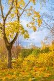 outono em Veliky Novgorod, Rússia St Sophia Cathedral com a torre de sino quadro por árvores do outono Fotos de Stock Royalty Free