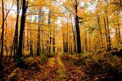 Outono em Vermont imagem de stock