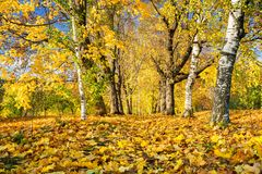 Outono ensolarado no parque Foto de Stock