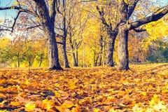 Outono ensolarado no parque Fotos de Stock