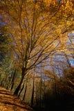 Outono, estrada de floresta nacional, TN imagens de stock royalty free