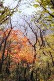 outono, floresta da queda imagem de stock