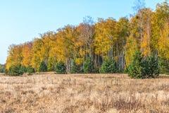 outono, floresta, natureza A manhã vívida na floresta colorida com sol irradia através dos ramos das árvores Cenário da natureza  fotografia de stock royalty free