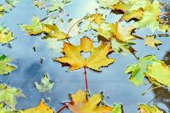 outono, folha de bordo amarela com o coração cortado que encontra-se na poça fotografia de stock royalty free