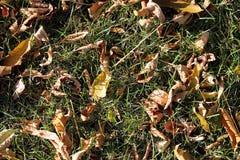 outono Folhas amarelas e verdes no fundo verde Imagem de Stock Royalty Free