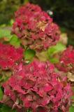 Outono, folhas coloridas Imagem de Stock