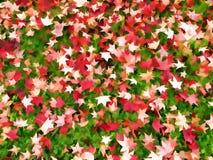 outono, folhas da queda na grama Teste padrão abstrato vermelho e verde Fotos de Stock Royalty Free