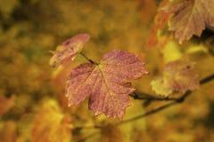 outono, folhas do amarelo nas árvores foto de stock royalty free