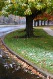 Outono frio imagens de stock royalty free