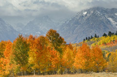 Outono grande de Tetons Fotos de Stock