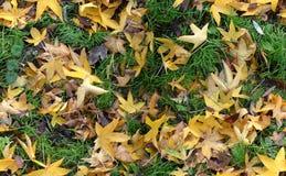 Outono Groundcovering (sem emenda) Imagens de Stock Royalty Free