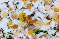 outono inesperado com neve Fotografia de Stock Royalty Free