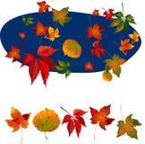 Outono leaves1 Fotografia de Stock Royalty Free