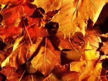 Outono leaves2 foto de stock