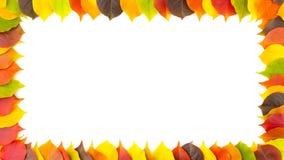 outono Limite o quadro das folhas outonais coloridas isoladas no branco animação 4K filme