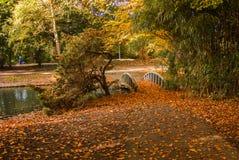 outono luxúria do ouro grande no parque com ponte pequena Fotografia de Stock Royalty Free