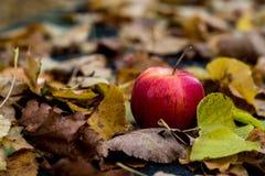 outono, maçã vermelha que encontra-se na folha foto de stock royalty free