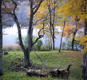 outono maduro Fotografia de Stock Royalty Free