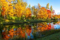 outono maduro da queda dourada no parque de Catherine, Tsarskoe Selo Pushkin, St Petersburg, Rússia imagens de stock royalty free