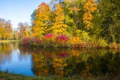 outono maduro da queda dourada no parque de Pavlovsky, Pavlovsk, St Petersburg, Rússia foto de stock royalty free