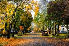 outono, meio de outubro em Novo Brunswick, Canadá imagem de stock royalty free