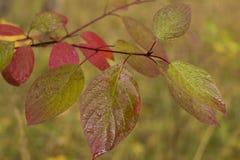 Outono molhado foto de stock