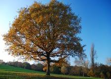 outono na charneca de Hampstead, Londres, Reino Unido imagens de stock