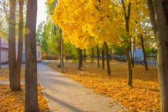 Outono na cidade imagens de stock royalty free