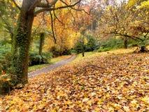 Outono na estrada secundária Fotos de Stock Royalty Free