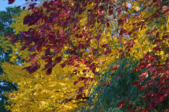 Outono na flor cheia fotografia de stock royalty free