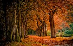 Outono na floresta Imagens de Stock Royalty Free
