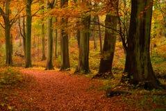 Outono na floresta Fotografia de Stock Royalty Free