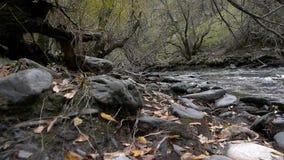 outono na floresta video estoque