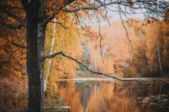 Outono na floresta Imagens de Stock